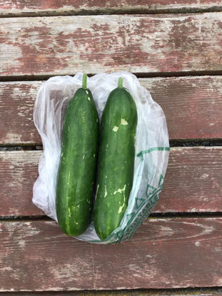 Imagen de Cucumber: For Pickup at Farm Fridays, 3-6 p.m.